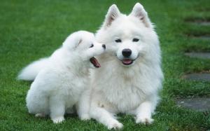 О чем разговаривают собаки